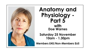 Anatomy & Physiology - Part 5